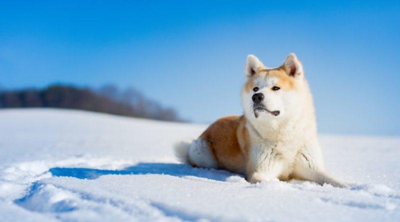 Часы к году Собаки